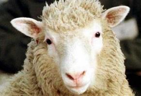 14-de-fevereiro-ovelha-dolly-primeiro-mamifero-a-ser-clonado-com-sucesso-a-partir-de-uma-celula-adulta