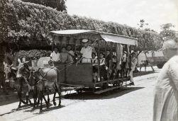 6 de Abril - Limoeiro (PE) - Bonde de tração animal em 1951.