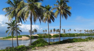 23 de Junho - Paisagem de coqueiros — Esplanada (BA) — 86 Anos.