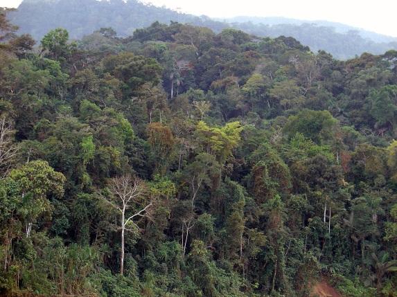 5 de Junho - Dia Mundial do Meio Ambiente - No Brasil, Dia da Ecologia.
