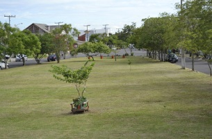 8 de Junho - Praça do Bairro Residencial - Eldorado do Sul (RS) - 29 Anos.