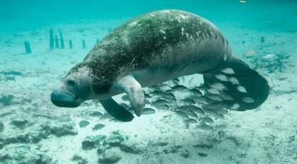 9 de Junho - Projeto Peixe Boi — Porto de Pedras (AL) 96 Anos.