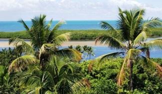 23 de Julho - Vista dos coqueiros e do mar — Santa Cruz Cabrália (BA) — 184 Anos em 2017.