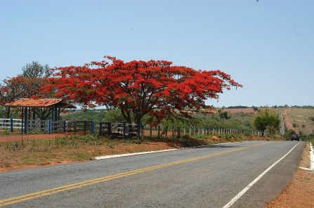 19 de Agosto – GO-139 entre Vianópolis e São Miguel do Passa Quatro — Vianópolis (GO) — 69 Anos em 2017.