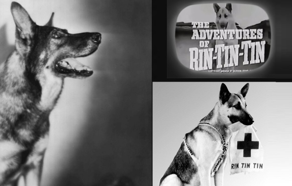 10 de Setembro – 1918 – Rin-Tin-Tin, cão-ator (m. 1932).