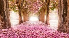 22 de Setembro – Primavera cor de Ipê.