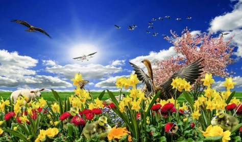 22 de Setembro – Primavera de flores, animais e avião.