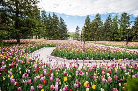 22 de Setembro – Primavera de flores e pinheiros.