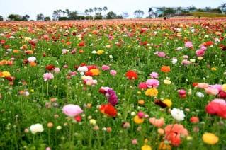 22 de Setembro – Primavera no campo de flores.