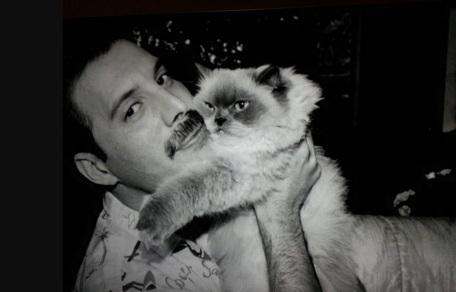 5 de Setembro – Freddie Mercury - 1946 – 71 Anos em 2017 - Acontecimentos do Dia - Foto 17 - Freddie Mercury.